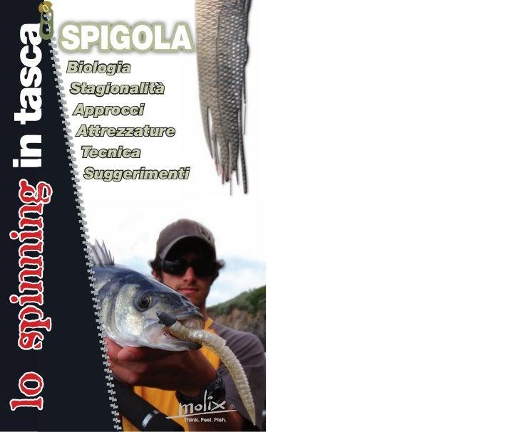 lo spinning in tasca                       SPIGOLA                       Biologia                       Stagionalità      ...