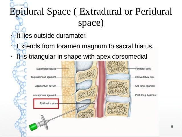 Epidural Space Diagram - Data Wiring Diagram