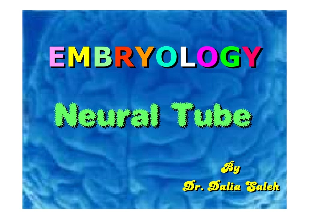 EMBRYOLOGY  Neural Tube            By       Dr. Dalia Saleh