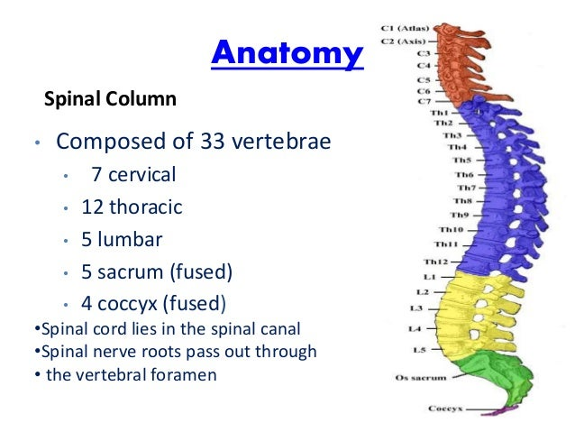 THE ST, TROS, & TAROT Spinal-cord-injuries-6-638