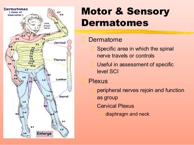 Spinal cord injury for Loss of motor control