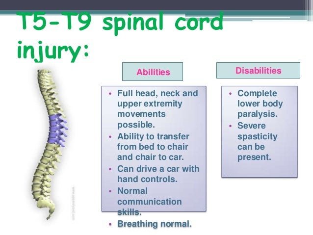 essay on spinal cord injury Mri studies of spinal cord injury ( order description this is the instructions below i will attach a paper showinh the exactly way how to injure the mouse in this.