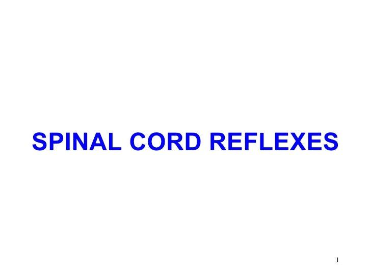 SPINAL CORD REFLEXES                   1