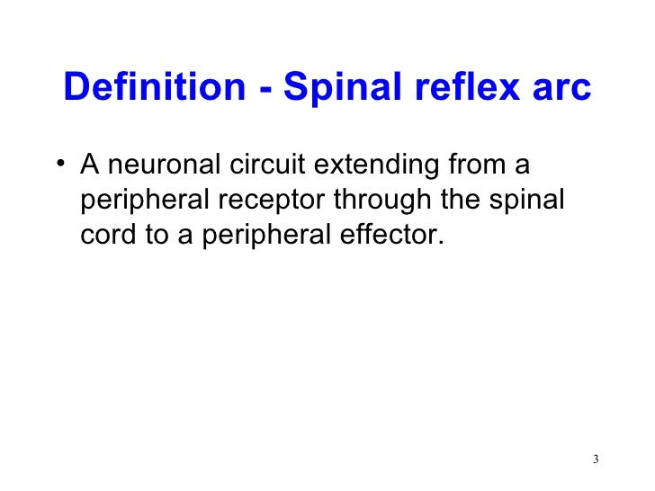 Chapter 13 the spinal cord & spinal nerves ppt video online download.