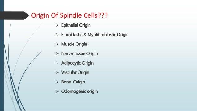 Origin Of Spindle Cells???  Epithelial Origin  Fibroblastic & Myofibroblastic Origin  Muscle Origin  Nerve Tissue Orig...