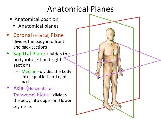 Spine Anatomy Basic Spine 2009