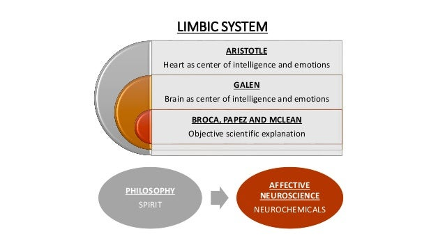 LIMBIC SYSTEM ARISTOTLE Heart as center of intelligence and emotions GALEN Brain as center of intelligence and emotions BR...