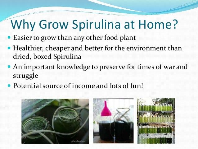 How to Grow Spirulina At Home- A step by Step Tutorial