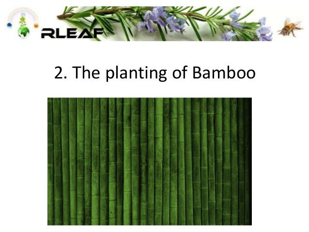 2. The planting of Bamboo