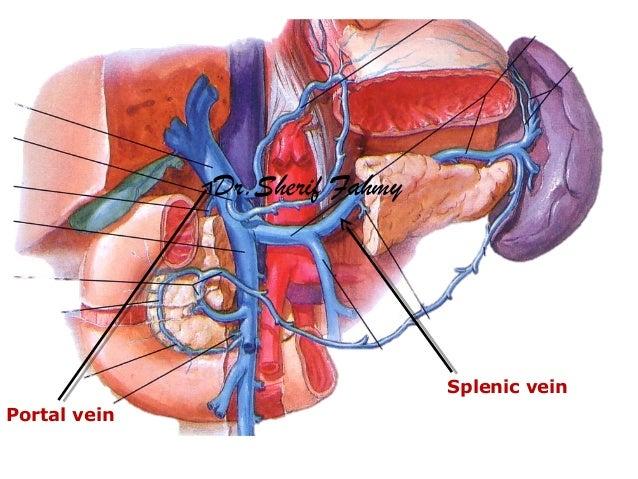 The Spleen (Anatomy of the Abdomen)