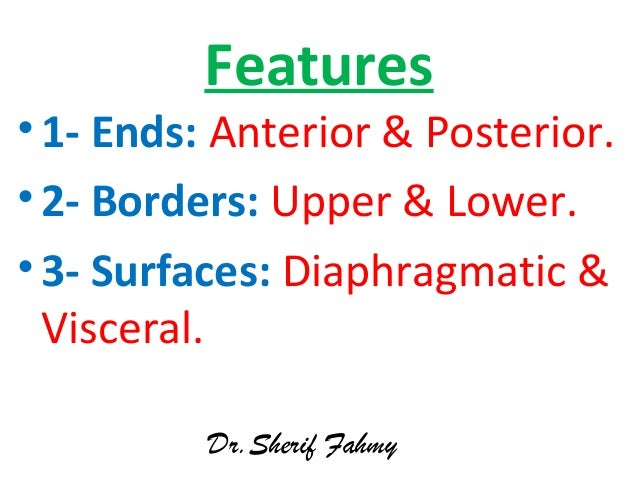Features •1- Ends: Anterior & Posterior. •2- Borders: Upper & Lower. •3- Surfaces: Diaphragmatic & Visceral. Dr.Sherif Fah...