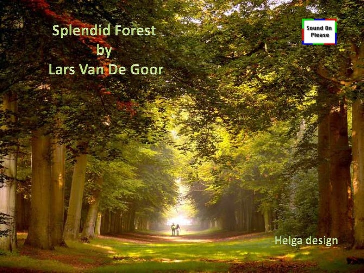 "Splendid Forest Photography by                      Lars Van De Goor ""Lars Van De Goor is an experienced photographer from..."