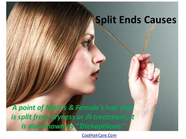 """Split Ends Causes  A point of Male's & Female's hair that  is split from dryness or ill-treatment, it  is also known as """"T..."""