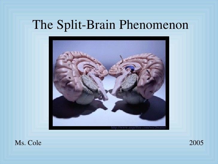 The Split-Brain Phenomenon Ms. Cole 2005 http://www. angelfire .com/ wi / 2brains /