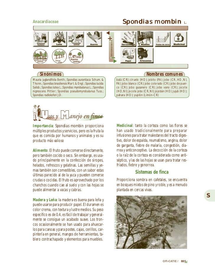 Descripciones de especies: Spondias mombinAnacardiaceae                                                                   ...