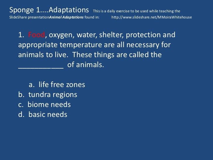 Animal Adaptations Worksheet 1