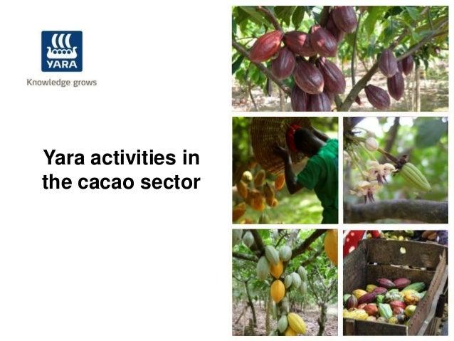 Yara activities inthe cacao sector