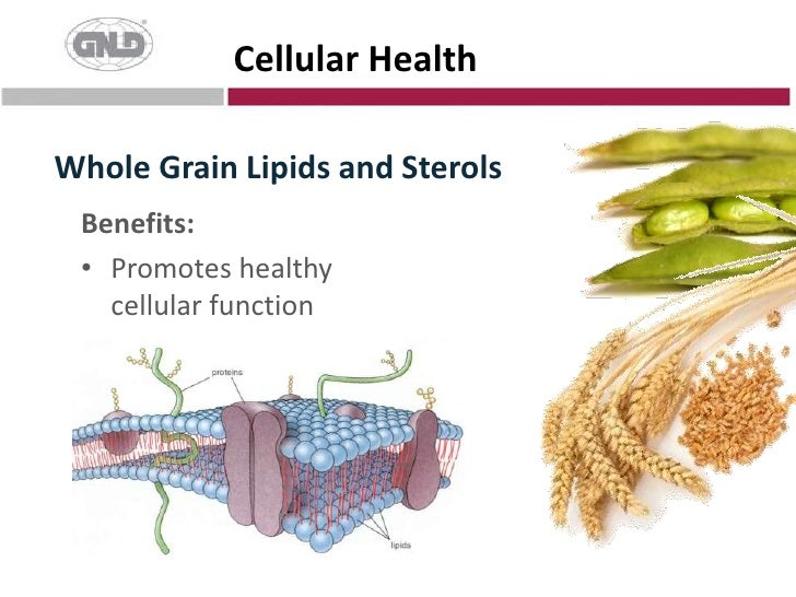 Whole Grain Lipids and Sterols<br />Cellular Health<br />Benefits:<br />Promotes healthy cellular function<br />