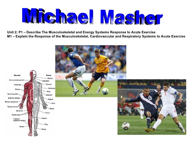 Michael Masher Unit 2: P1 – Describe The Musculoskeletal and Energy Systems Response to Acute Exercise M1 –  Explain the R...