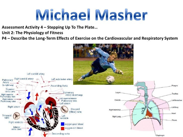 Assessment Activity 4 – Stepping Up To The Plate…Unit 2: The Physiology of FitnessP4 – Describe the Long-Term Effects of E...