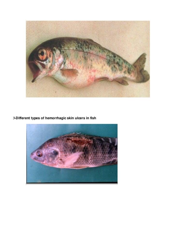 Fish Spots Slide 2