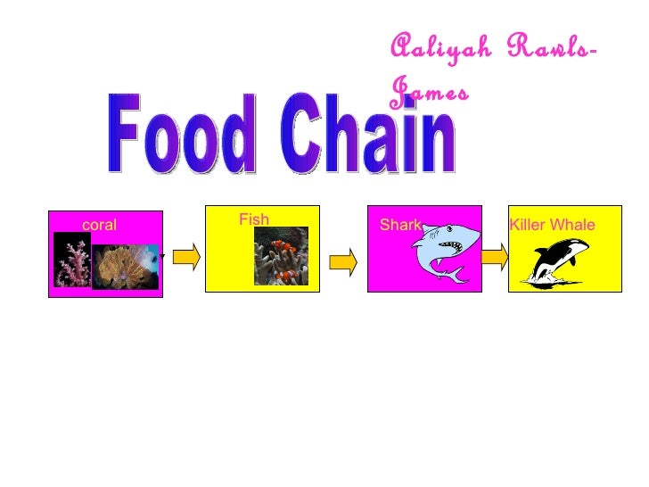 Food Chain coral Fish Shark Killer Whale Aaliyah Rawls-James
