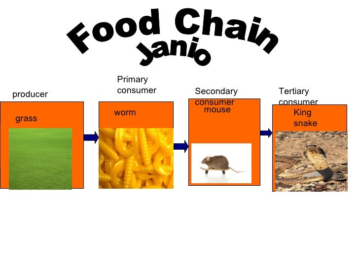 A Snake S Food Chain