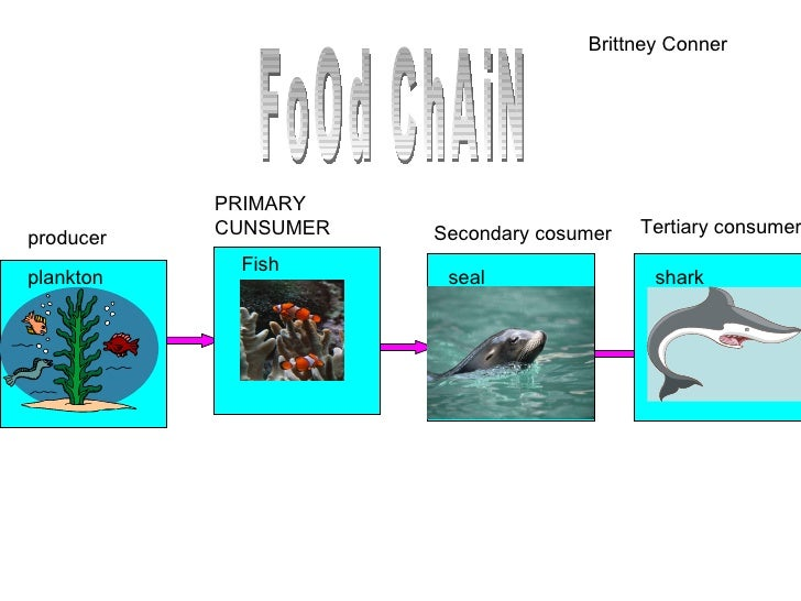Spradley Food Chain on Zebra Food Chain