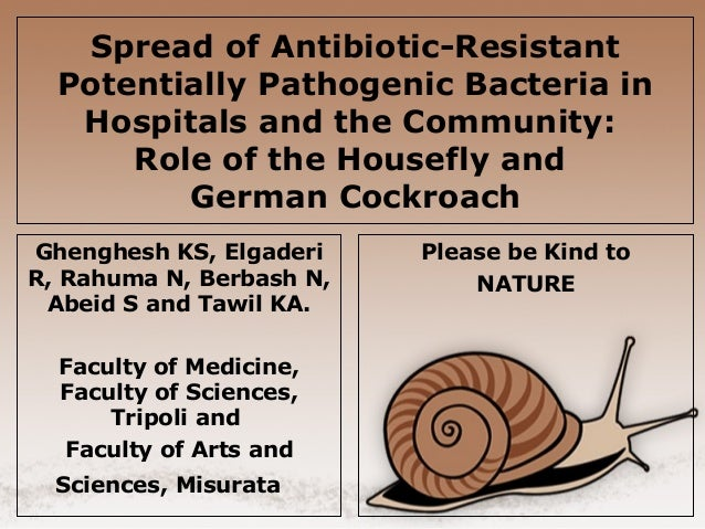 Spread of Antibiotic-Resistant Potentially Pathogenic Bacteria in Hospitals and the Community: Role of the Housefly and Ge...