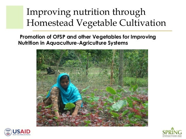 Improving nutrition throughHomestead Vegetable CultivationPromotion of OFSP and other Vegetables for ImprovingNutrition in...