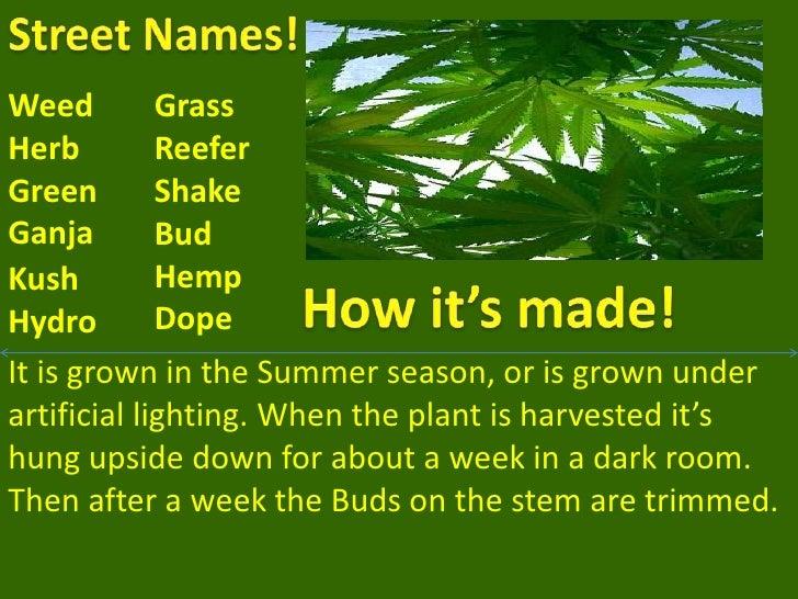 Spring 2010 marijuana! evan brenden