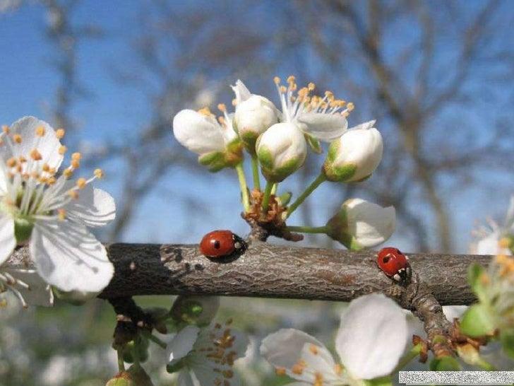 Muzica: Viktor Vogel - Splendoarea primăverii