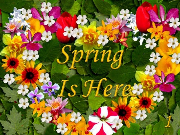 Spring <br />Is Here<br />1<br />
