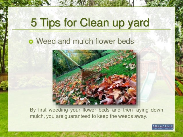 Spring Yard Clean Up Tips
