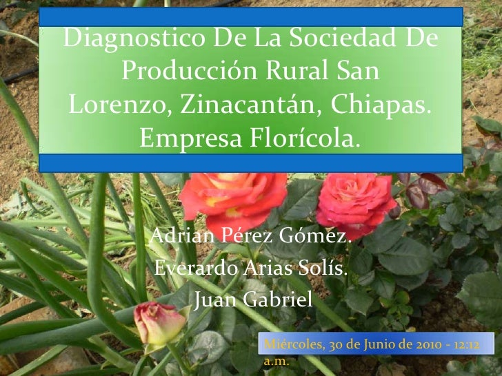 Diagnostico De La Sociedad De Producción Rural San Lorenzo, Zinacantán, Chiapas. Empresa Florícola.<br />Adrian Pérez Góme...