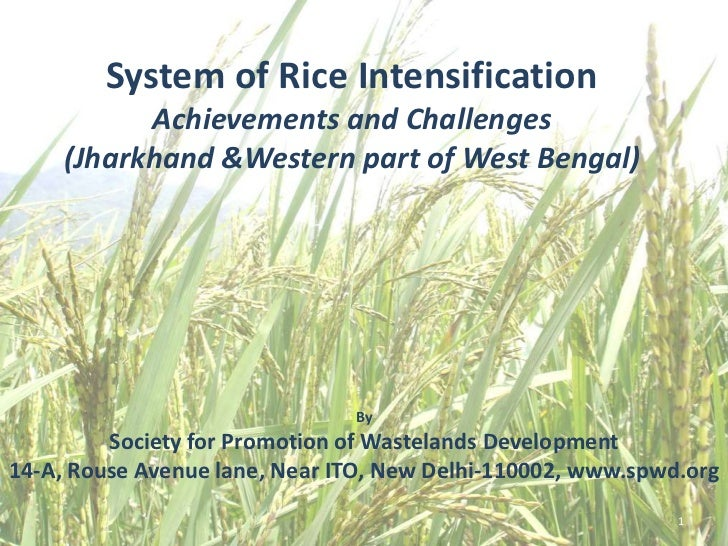 System of Rice Intensification           Achievements and Challenges     (Jharkhand &Western part of West Bengal)         ...