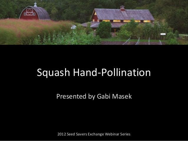 Presented by Gabi Masek 2012 Seed Savers Exchange Webinar Series Squash Hand-Pollination