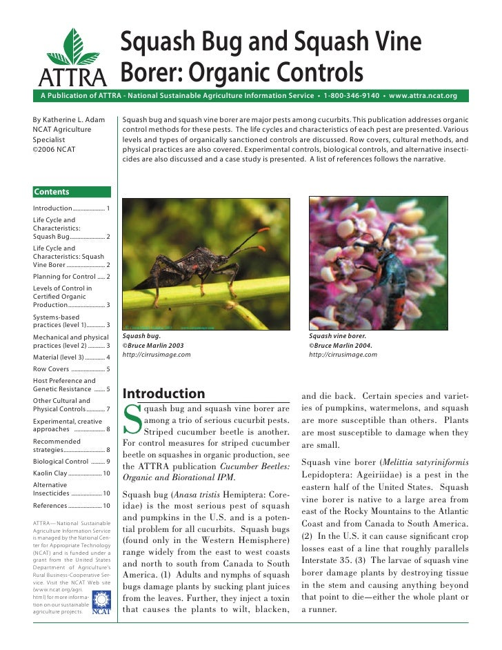 Squash Bug and Squash Vine  ATTRA Borer: Organic Controls   A Publication of ATTRA - National Sustainable Agriculture Info...