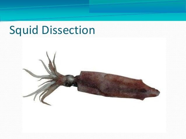 Eggs In Squid Diagram Circuit Connection Diagram