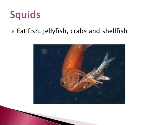 Squid Funnel Squid Dissection Prela...