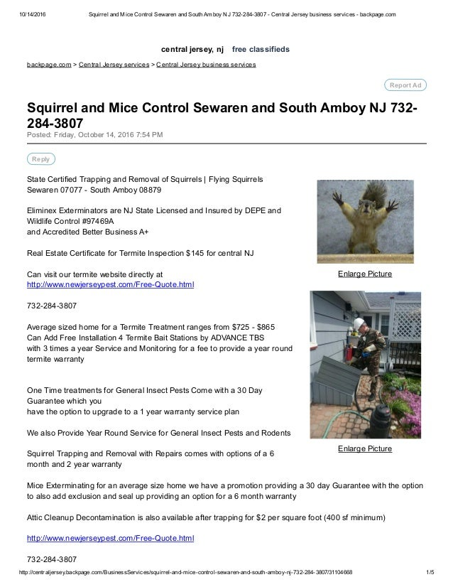 Squirrel and mice control sewaren and south amboy nj 732 284-3807