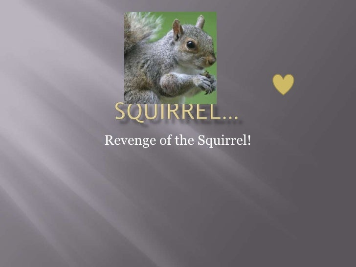 Squirrel…<br />Revenge of the Squirrel!<br />