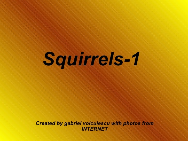 Squirrels-1   Created by gabriel voiculescu with photos from INTERNET