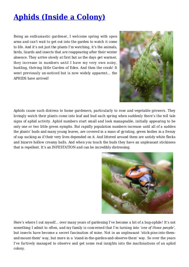Aphids (Inside a Colony) Being an enthusiastic gardener, I welcome spring with open arms and can't wait to get out into th...