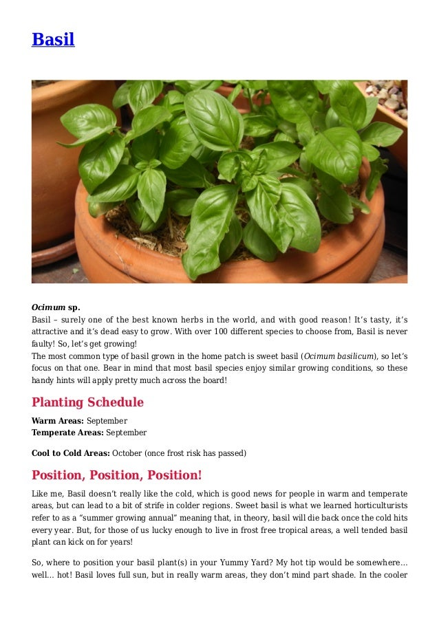 Basil Ocimum sp. Basil – surely one of the best known herbs in the world, and with good reason! It's tasty, it's attractiv...