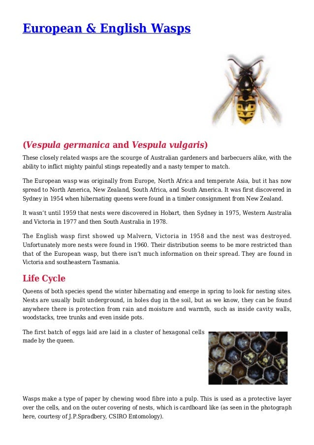European & English Wasps (Vespula germanica and Vespula vulgaris) These closely related wasps are the scourge of Australia...