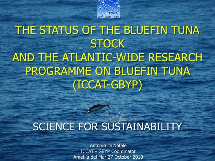 THE ATLANTIC-WIDE RESEARCH PROGRAMME ON BLUEFIN TUNA   (ICCAT-GBYP)<br />THE STATUS OF THE BLUEFIN TUNA STOCK <br />AND TH...