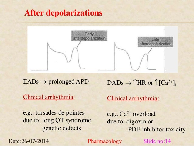 After depolarizations  EADs  prolonged APD  Clinical arrhythmia:  e.g., torsades de pointes  due to: long QT syndrome  ge...