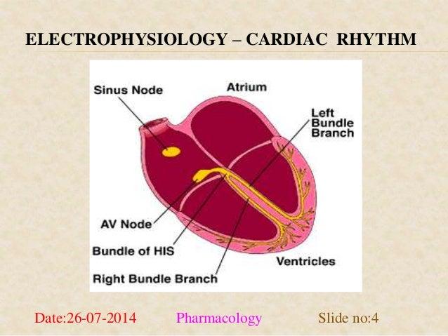 ELECTROPHYSIOLOGY – CARDIAC RHYTHM  Date:26-07-2014 Pharmacology Slide no:4