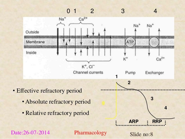 0 1 2 3 4  • Effective refractory period  • Absolute refractory period  • Relative refractory period  1  0  2  3  4  ARP R...